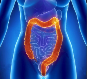 female colon